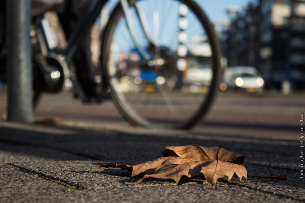 Осенний лист в Амстердаме