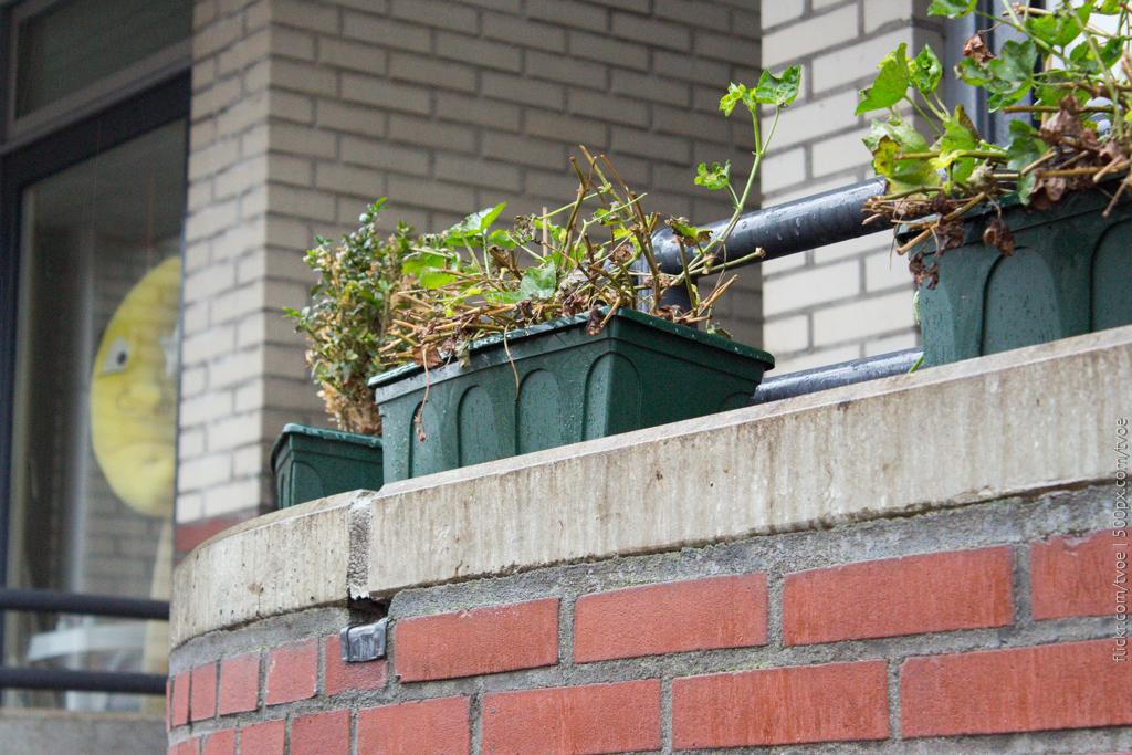 Растения на балконе в Амстердаме